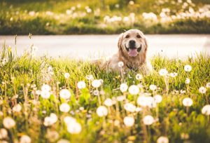 Can Dogs Have Allergies?